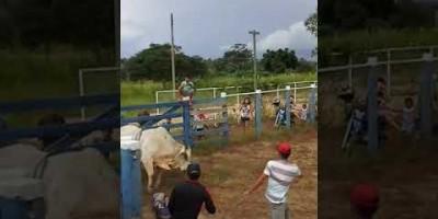 Jovem de 16 anos morre ao bater a cabeça durante treino de montaria em touros no Vale do...