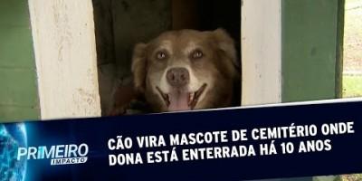 Bob Coveiro, o cachorro que toma conta do túmulo da dona há 10 anos | Primeiro Impacto...