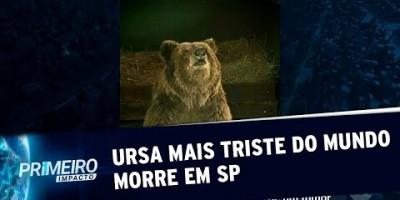 Ursa mais triste do mundo morre no interior de São Paulo | Primeiro Impacto (25/07/19)