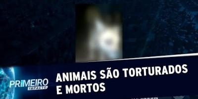 VÍDEO - Caso de tortura a animais choca moradores do Grajaú, SP | Primeiro Impacto...