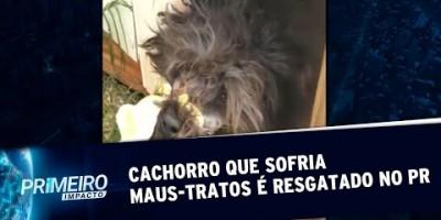 Mulher que amarrou focinho de cachorro é levada à delegacia no PR | Primeiro Impacto...