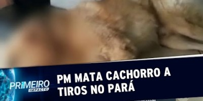 PM dá três tiros em cachorro que latia em frente à sua casa (15/08/19)