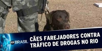 Cães farejadores contra o tráfico de drogas no Rio de Janeiro | SBT Brasil (22/07/19)
