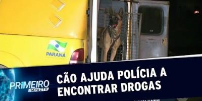 VÍDEO - Cão farejador ajuda polícia a encontrar 35 tabletes de maconha no PR |...