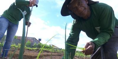 Após ter que deixar a vida no campo, aposentado ajuda a criar horta nos fundos de UBS em...