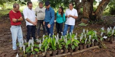 ROLIM DE MOURA: Secretaria de Agricultura investe na Produção de mudas de Cacau Clonal