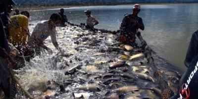 Seminário internacional na Capital foca gestão pesqueira no Rio Madeira