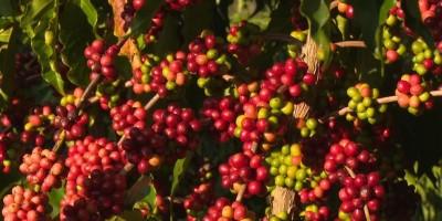 Cacoal recebe concurso de beleza para moradoras rurais durante I Festa do Café, em RO
