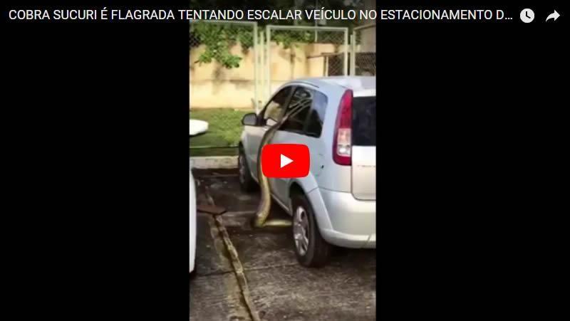 COBRA SUCURI É FLAGRADA TENTANDO ESCALAR VEÍCULO NO ESTACIONAMENTO DE FACULDADE - VEJA VÍDEO