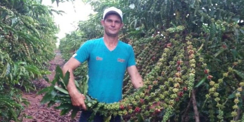 Propriedade sustentável de café conilon é exemplo de produção de qualidade no município de Alto Alegre dos Parecis