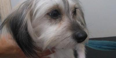 Rolim de Moura: Utilidade Publica - Família procura por cachorrinha desaparecida