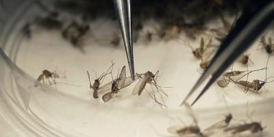 Com alerta de surto de dengue, drones buscam focos do Aedes aegypti em Ariquemes, RO