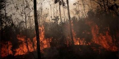 'A floresta leva décadas ou centenas de anos pra se recuperar': O que difere os...