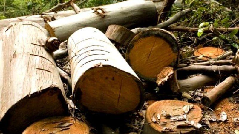 Mais um trabalhador morre esmagado em derrubada de árvore