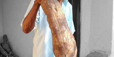 Agricultor colhe mandioca gigante de 14 kg