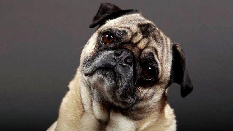 TECNOLOGIA: Empresa chinesa se prepara para clonar memórias de animais de estimação