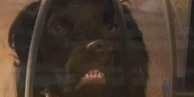 'Cachorro do demônio' faz cara estranha e viraliza na web