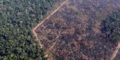 Desmatamento da Amazônia dispara e cresce 29,5% neste ano