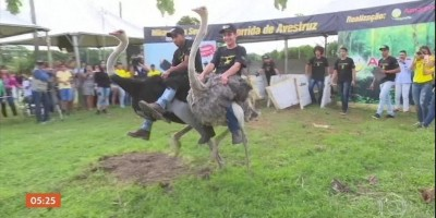 RONDÔNIA: Famosa corrida de avestruzes movimenta calendário turístico no interior