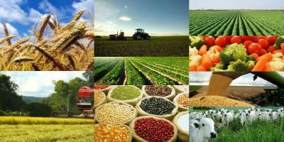 RONDÔNIA: Valor da Produção Agropecuária deve atingir R$ 10,2 bilhões