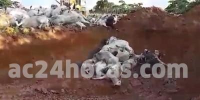 Gado morre em estação de captação de água por suspeita de choque; empresa nega