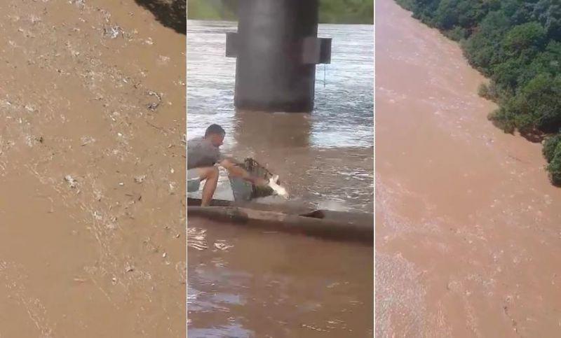 mato-grosso-videos-mostram-espetaculo-de-peixes-subindo-rio-1576229710