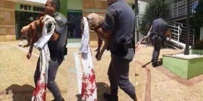 Casal briga e mulher ataca cachorro do marido com faca