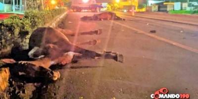 Animais na pista causam grave acidente na BR 364 em Ji-Paraná