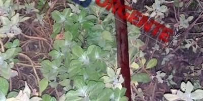 Mulher é morta com golpes de facão no pescoço em Ariquemes