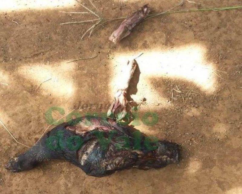 Grupo de índios isolados aparece em sítio na região de Seringueiras e assusta moradores