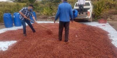 Produtores de Café de Rolim de Moura vão participar de concurso estadual de qualidade...