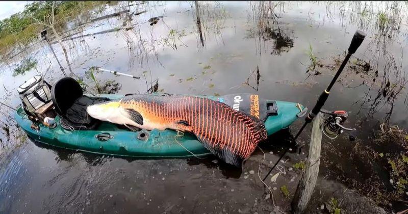 Pescador fisga pirarucu de 2 metros e 100 kg em RO: