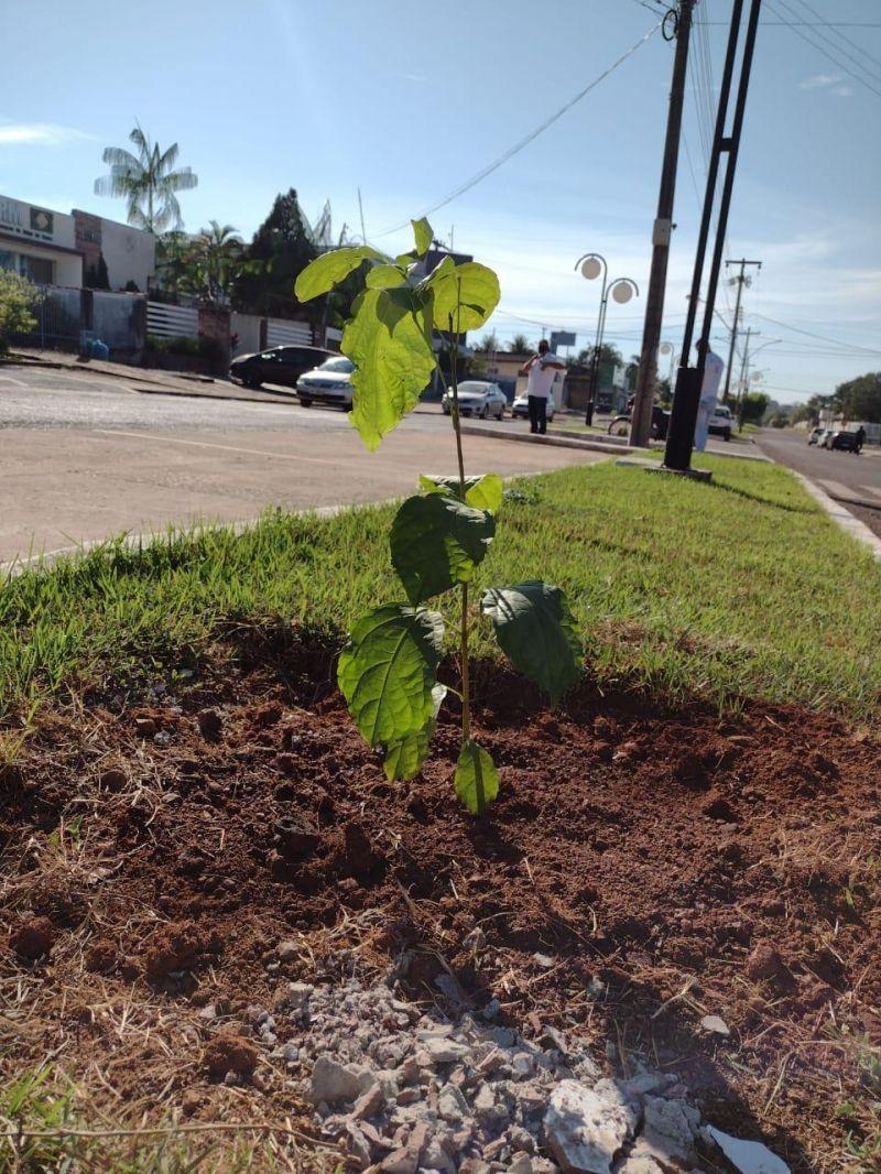 Mudas de árvores são plantadas no centro de Rolim de Moura em alusão ao dia mundial do meio ambiente