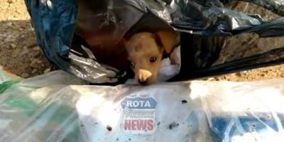 COVARDIA: Garis encontram cachorrinho dentro de saco de lixo no setor 17 em Vilhena