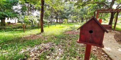 Semana da árvore: Por que devemos plantá-las?