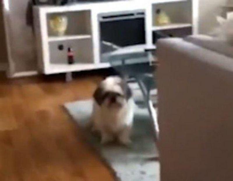 Chocante! Menina joga cachorro em máquina de lavar para ganhar likes