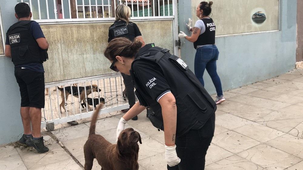 Polícia encontra cinco cachorros congelados em casa no RS